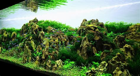 Aquascape Gallery by Bubbles Aquarium Aquascapes 2009 Aquascaping Gallery