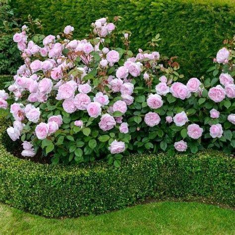 beautiful flower garden ideas   home flower