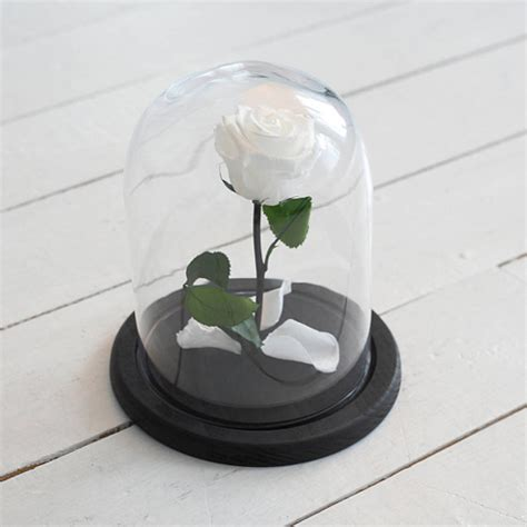 forever rose in glass dome forever white rose in glass dome