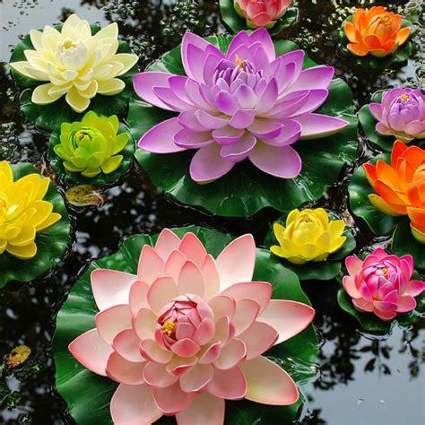 imagenes de flores acuaticas flores acuaticas