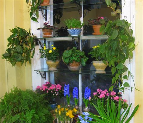 window gardens may day window suprises blindsgalore blog