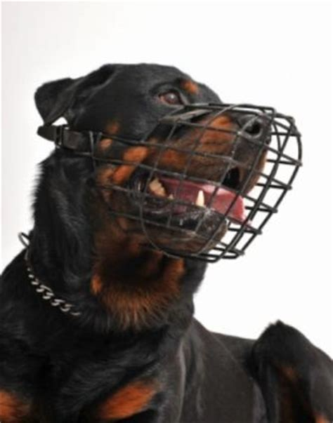 are rottweilers aggressive dogs aggressive breeds lovetoknow