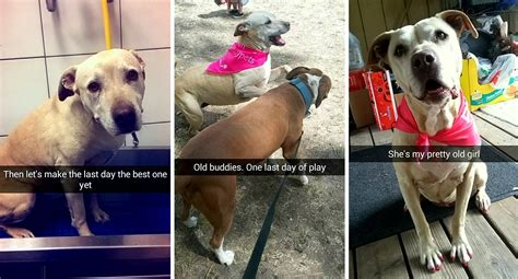 dogs last day snapchats cherished s last day in a heartfelt tribute