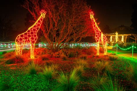 zoo lights zoolights fresno chaffee zoo