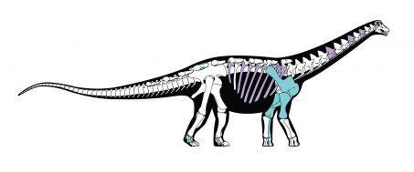decouverte dun fossile de dinosaure africain proche des