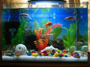 home design big fish 28 modern fish tanks that inspire relaxation