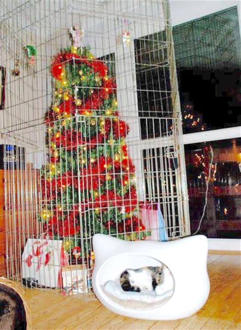 protect christmas tree from cat ferret farm 7 ways to protect a tree from your ferret