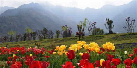 bagai bunga bermekaran indahnya puisi dan bunga di kashmir