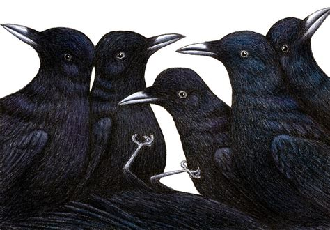A Murder Of Crows a murder of crows drawing by don mcmahon