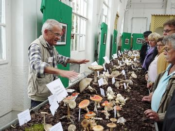 Pilze Botanischer Garten by Pilzausstellung