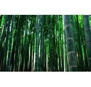 Bamboos Backgound  HD Desktop Wallpapers 4k