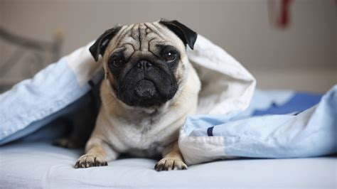 verkehr im bett unhygienisch oder gem 252 tlich hund im bett eklig oder