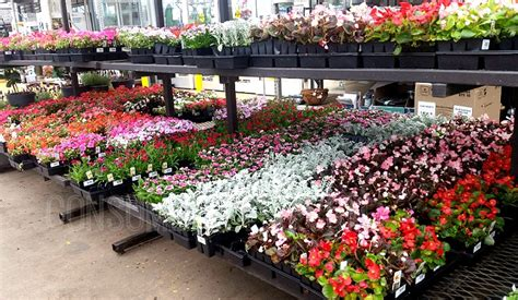 home depot memorial day sale save big  flowers