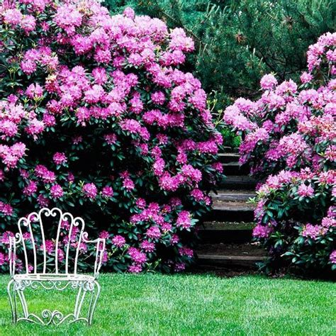the 25 best year round flowers ideas on pinterest flowers in garden flower hedge and all