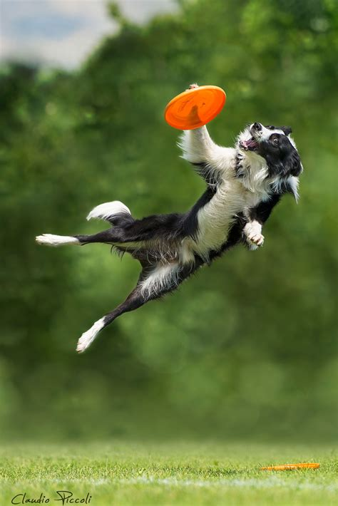 flying with a puppy dogs can fly in photo series by claudio piccoli 20 pics bored panda