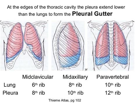Caps Roofing Jasper Tn - paravertebral gutter anatomy complications of thoracic