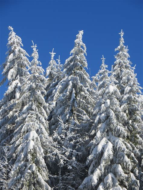 walmartcom mountain frost pine free images landscape branch snow cold white mountain range evergreen weather