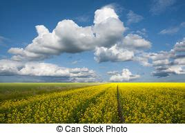 free royalty free stock images from picjumbo field stock photo images 18 321 field royalty