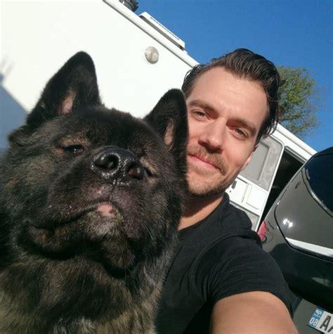 henry s puppies henry cavill