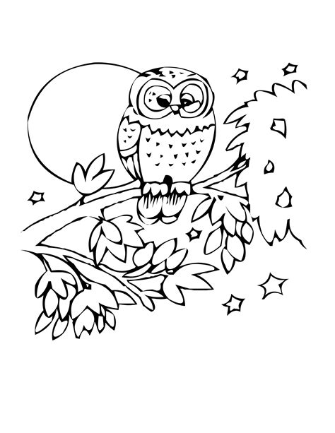 coloring pages canary bird flying owl coloring pages pin canary bird outline page