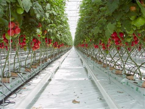 gardens and grow media homegrown hydroponics