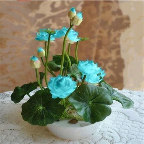 Harga Murah Lotus Seed Benih Bunga Teratai Flower Biji Tanaman Air buy grosir bunga dalam ruangan pot from china bunga