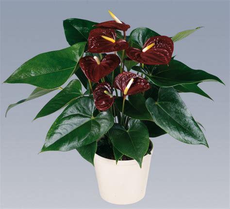 Buku Menanam Merawat Keladi Hias cara menanam dan merawat tanaman hias dalam pot tanaman