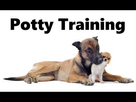how to house train a dog fast puppy potty training the paper method dog breeds picture
