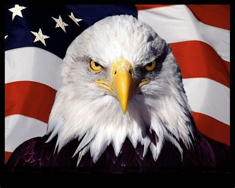 Patriotic Home Decorations eagle usa