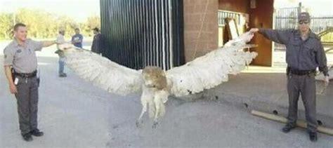 Texas Barn Owls La Lechuza Archives True Horror Stories Of Texas