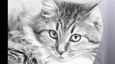 funny pets grayscale photo coloring book  adults youtube