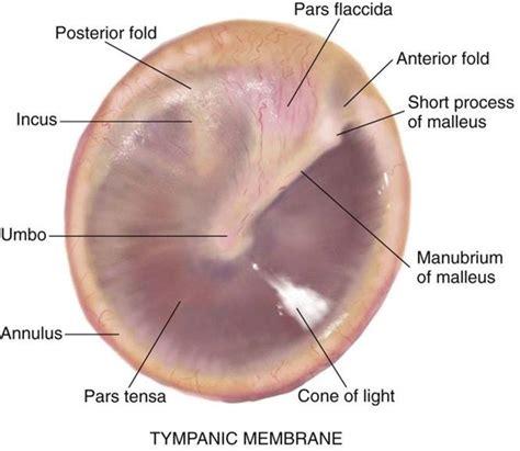 ear examination with otoscope tympanic membrane education nursing public heath