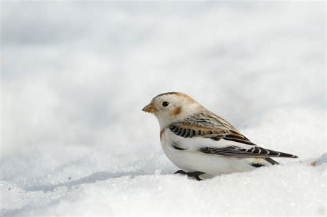 winter birding so rhode island sorhodeisland com
