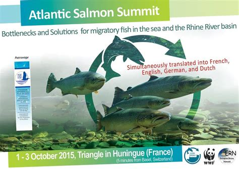 atlantic summit media salmon come back media