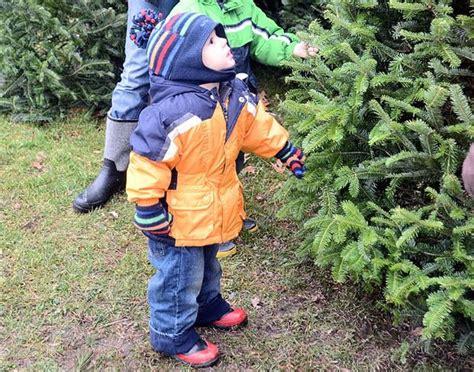 cny s cut your own christmas tree farms syracuse com