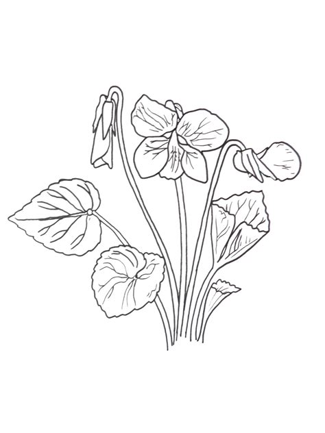 Violet Coloring Page great monarch activities for ones