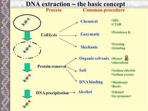 proteinase k dna extraction protocol dna extraction ppt
