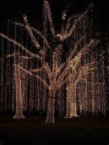 picture of tree with lights 25 best ideas about lights on