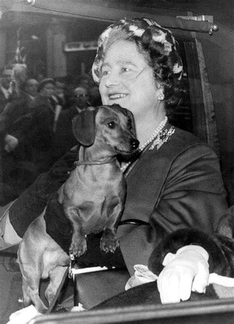 queen elizabeth s dog 1000 images about dachshunds and others on pinterest