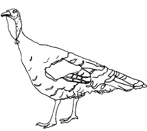 coloring page wild turkey wild turkey coloring pages coloring home