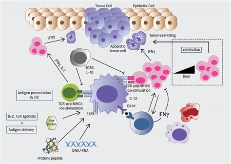 cell based immunotherapy for cancer related keywords suggestions for hpv cancer cells