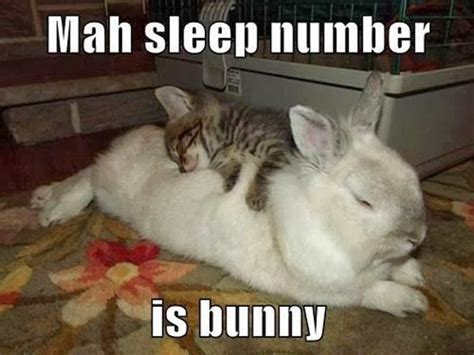 Funny Bunny Memes - can never get enough of funny animals 20 pics