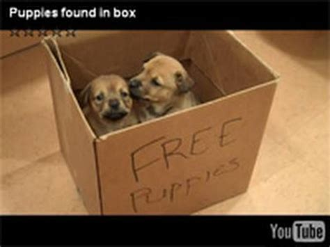 puppy in a box puppies found in box