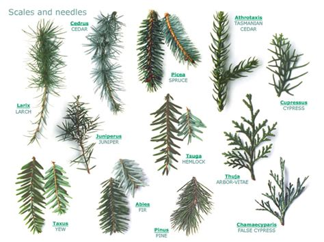 rogers trees and shrubs fabulously useful site for