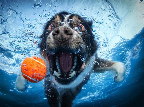 underwater dogs quot underwater dogs quot photos go viral and become a book photo 1 pictures cbs news