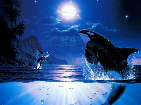 killer whales wallpapers fun animals wiki videos