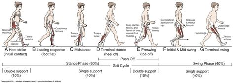 swing gait gait analysis you can run but you can not hide the