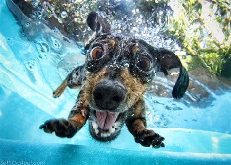 dogs underwater these underwater photos will make your day caveman circus caveman circus