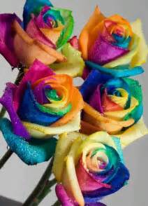 colorful roshes beautiful and colorful flowers beautyway2life