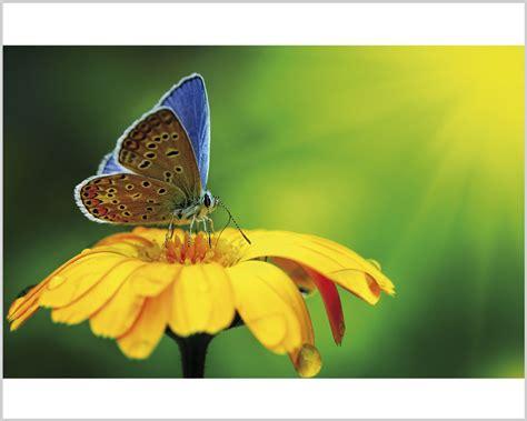 farfalla fiore graziosa farfalla su fiore animali sta su tela